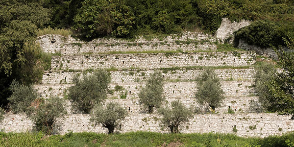 olivi-SORAVITO-sito